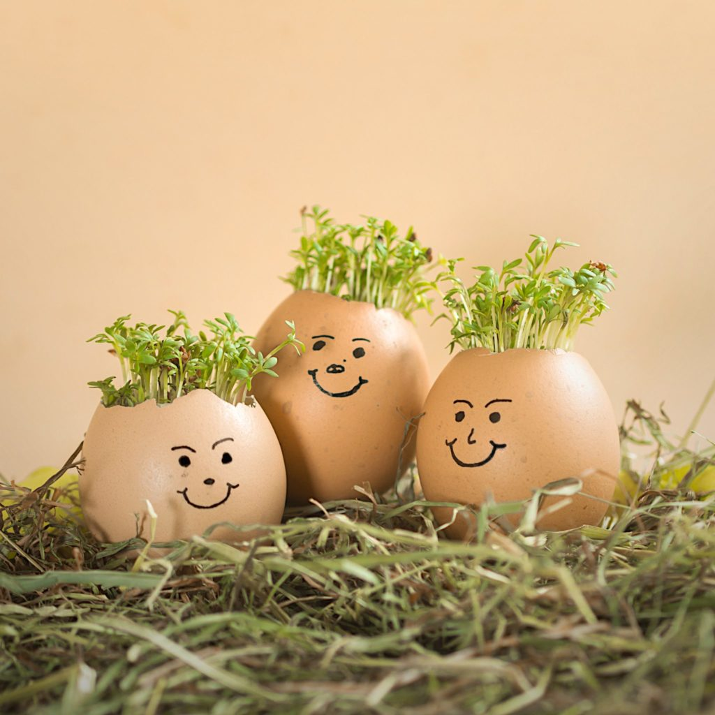 growing cress in eggs